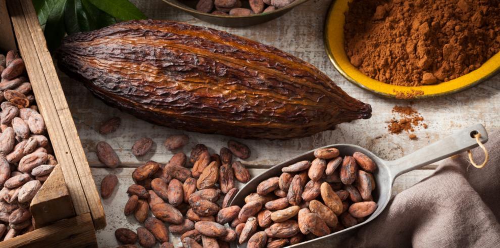 Componentes del cacao protegen de males cardiovasculares, indica estudio