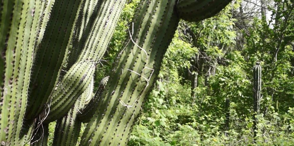 México alberga el mayor santuario de cactus del mundo con más de 50 especies