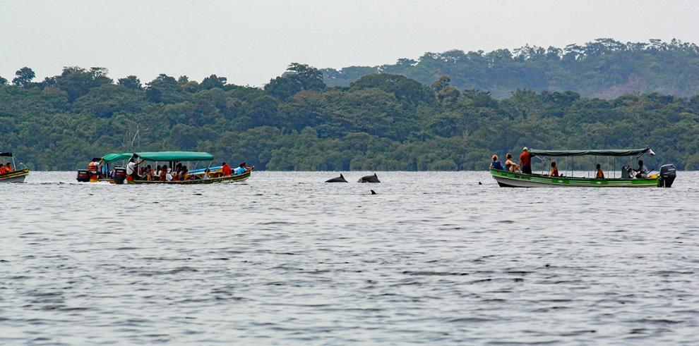 Embarcaciones amenazan a delfines en el archipiélago de Bocas del Toros