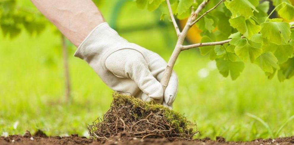 Panamá espera plantar 85 mil árboles en el Día de la Reforestación