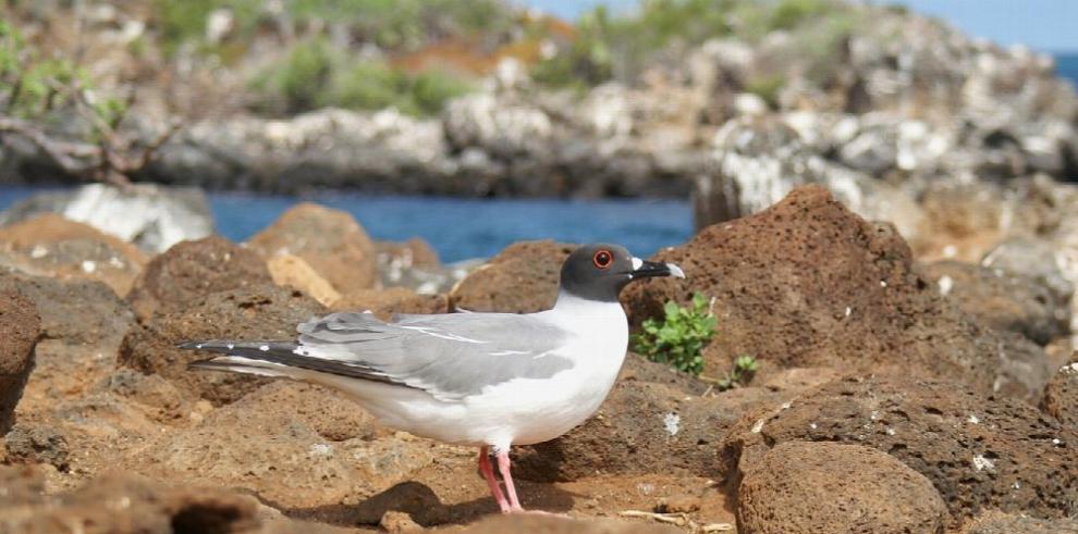 El 95% de las especies de Galápagos está en buen estado