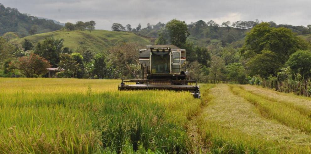El sector agropecuario se reúne mañana en Penonomé