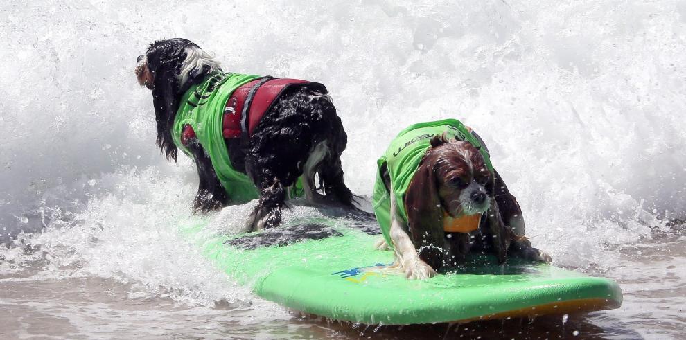 Perros participaron en una destacada competencia de surf