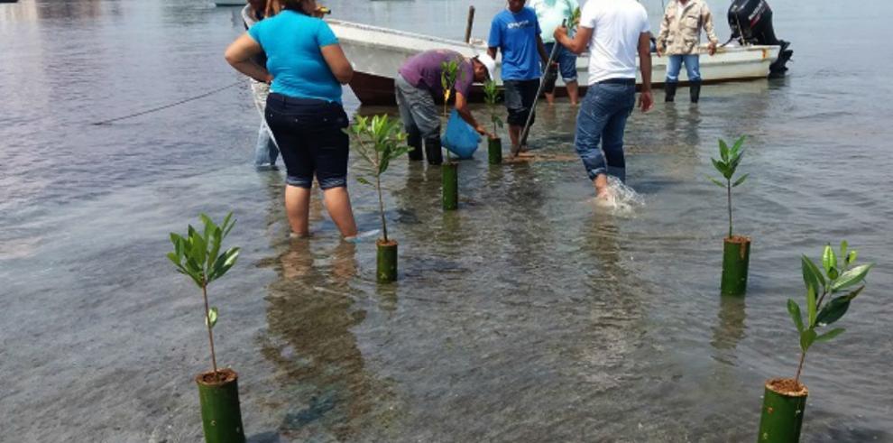 Reforestación, una opción para recuperar los manglares de Bocas