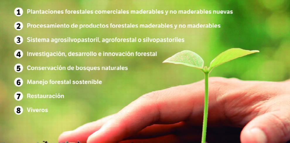 Incentivos para la forestación