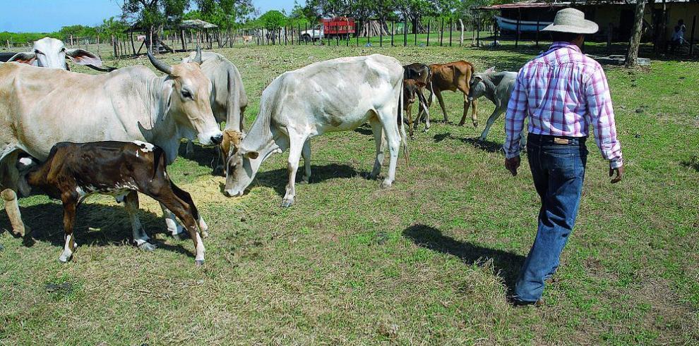 El MIDA habilita pozos para la ganadería en Los Santos