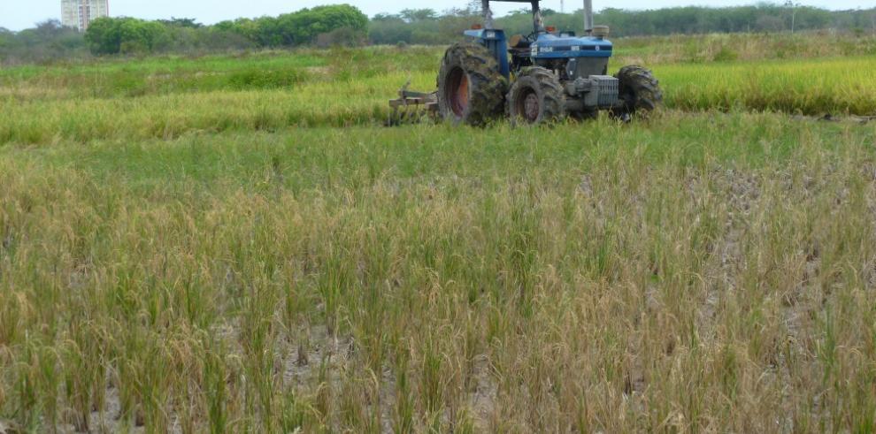 Panamá invertirá $11,6 millones en investigación agropecuaria