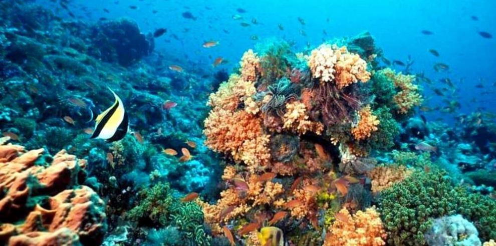 Salvar el 'gran arrecife' promete primer ministro australiano