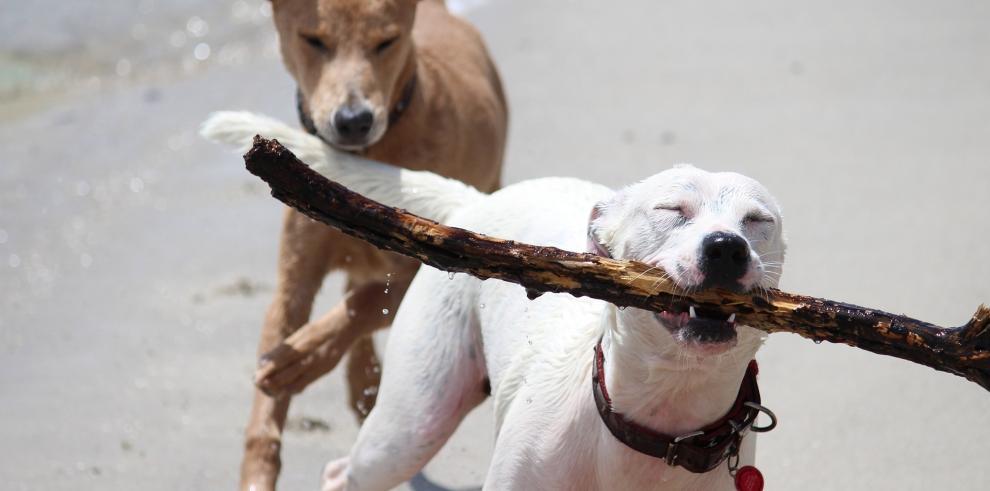 Veterinarios británicos desaconsejan lanzar palos a los perros