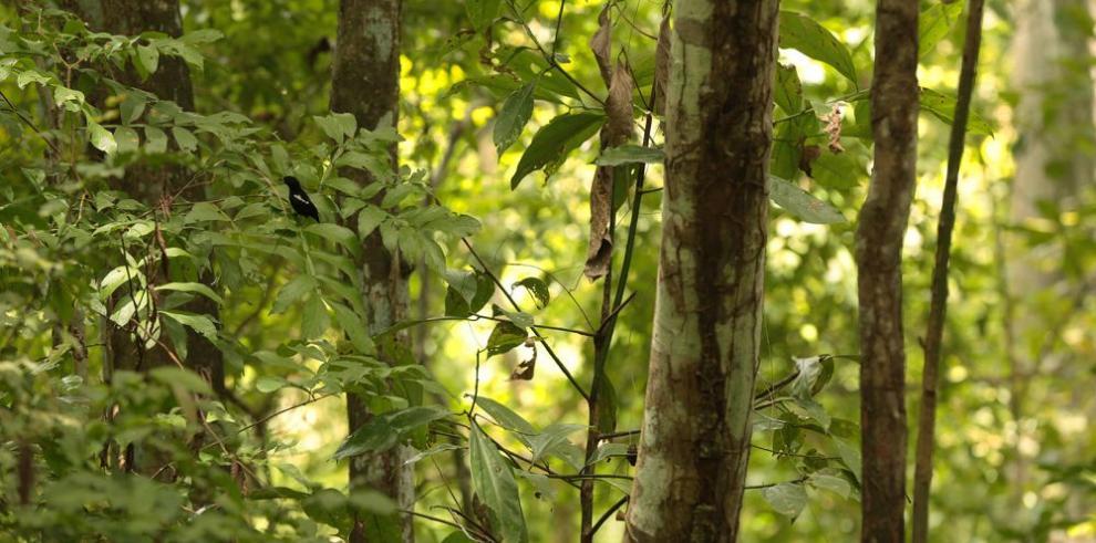 Avanza estudio sobre bosques resistentes al cambio climático