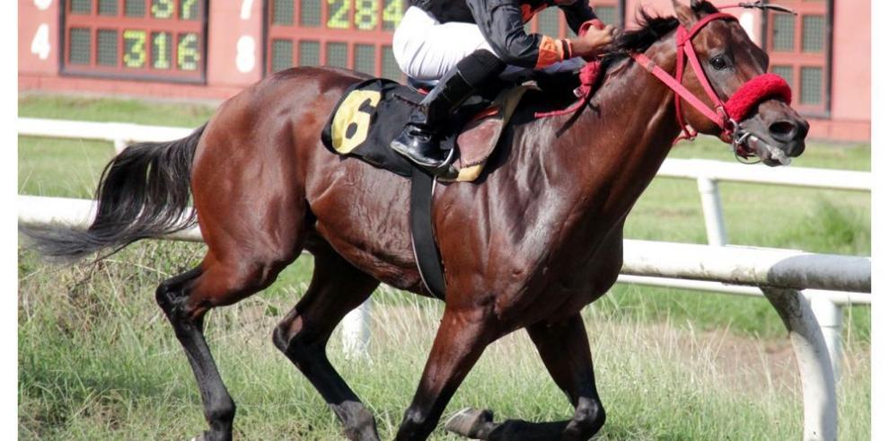 Equinos veloces destacarán en la tanda nocturna