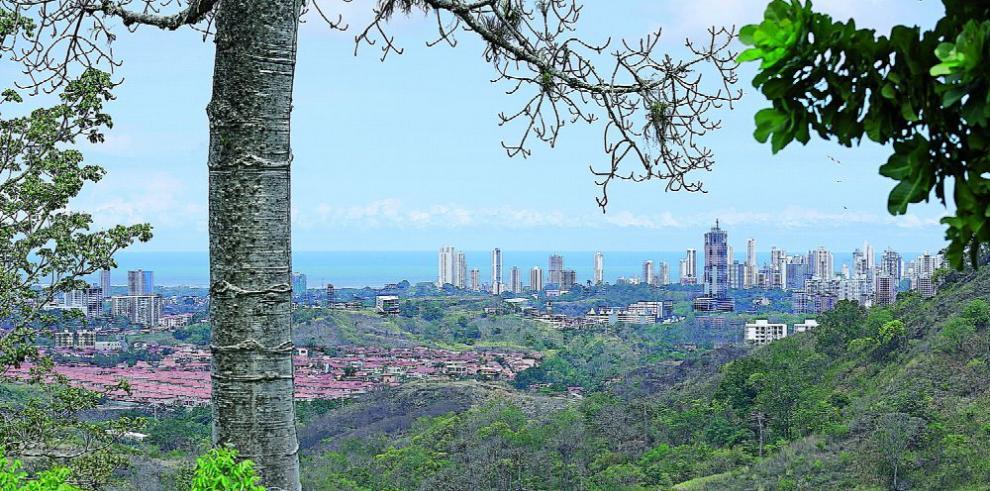 Nueve beneficios de los árboles urbanos