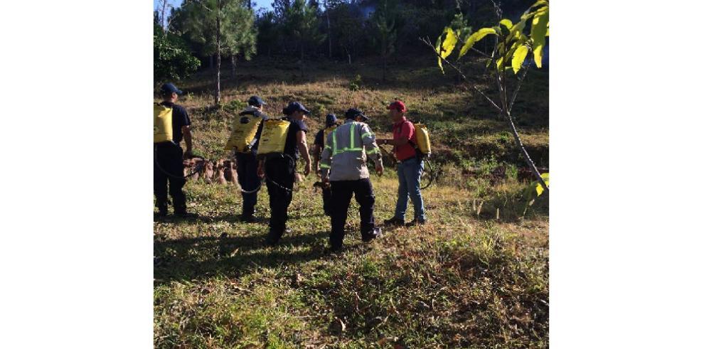 Incendio arrasó con 89 hectáreas en reserva forestal de Veraguas