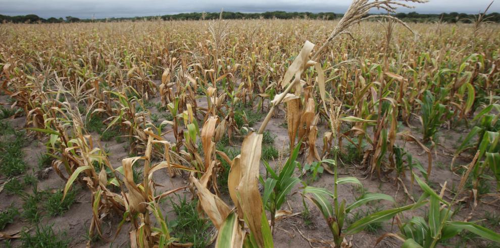 Zimbabwe declara estado de desastre agrícola por causa de sequía