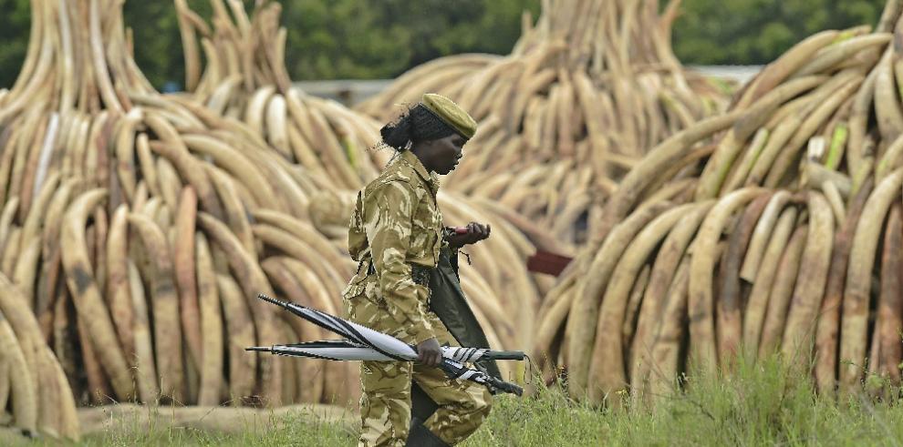 Kenia destruye la mayor cantidad de marfil de la historia