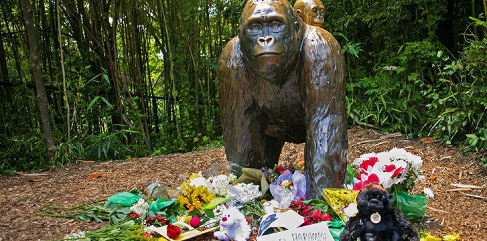 Investigan polémica muerte de gorila en zoológico de EE.UU.