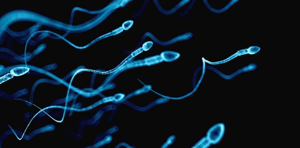 Crean espermatozoides humanos a partir de células de la piel
