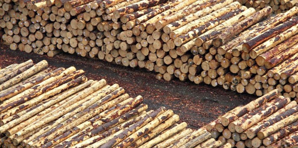 Exportaciones forestales chilenas cerrarán con baja