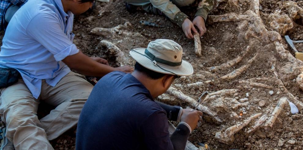Científicos hallan cola de dinosaurio en ámbar de Cretácico medio
