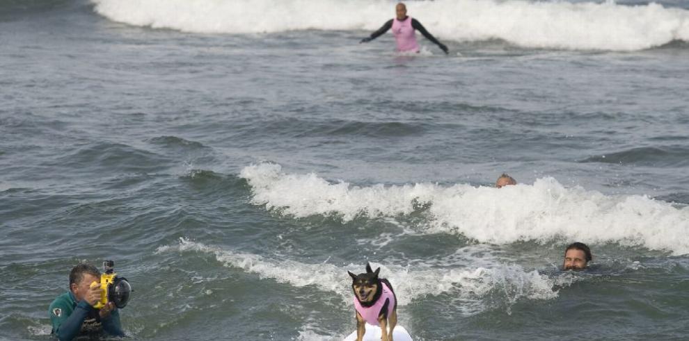 Perros surfistas invaden EE.UU.