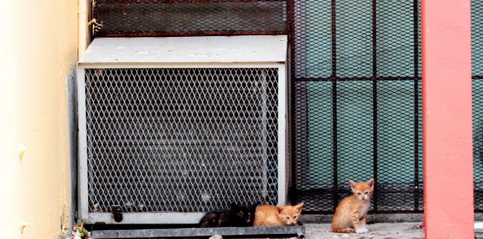 Universidad busca solución a la sobrepoblación de gatos