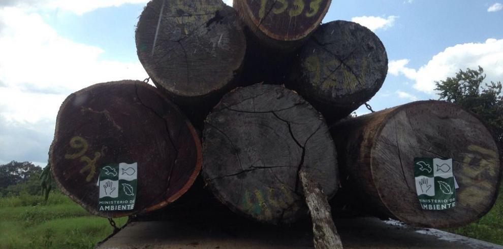 Se inicia operativo forestal en Panamá Este y Darién