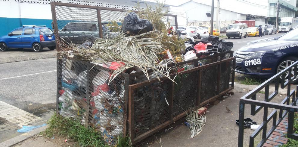 Instalarán centros de acopio para recoger los arbolitos de Navidad