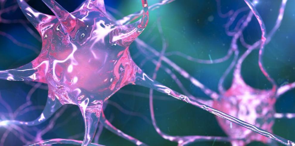 Neuronas puede influir en los gustos alimenticios