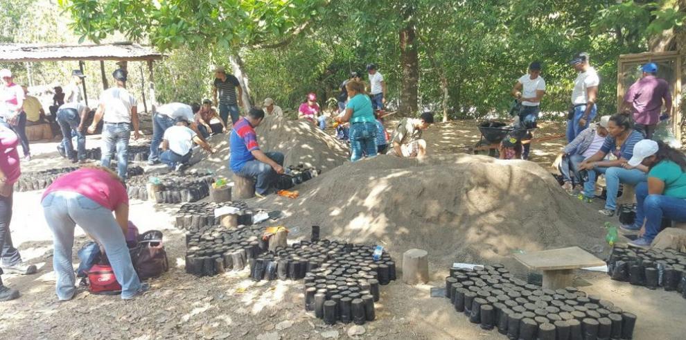 En Coclé continúa el proyecto de siembra de árboles