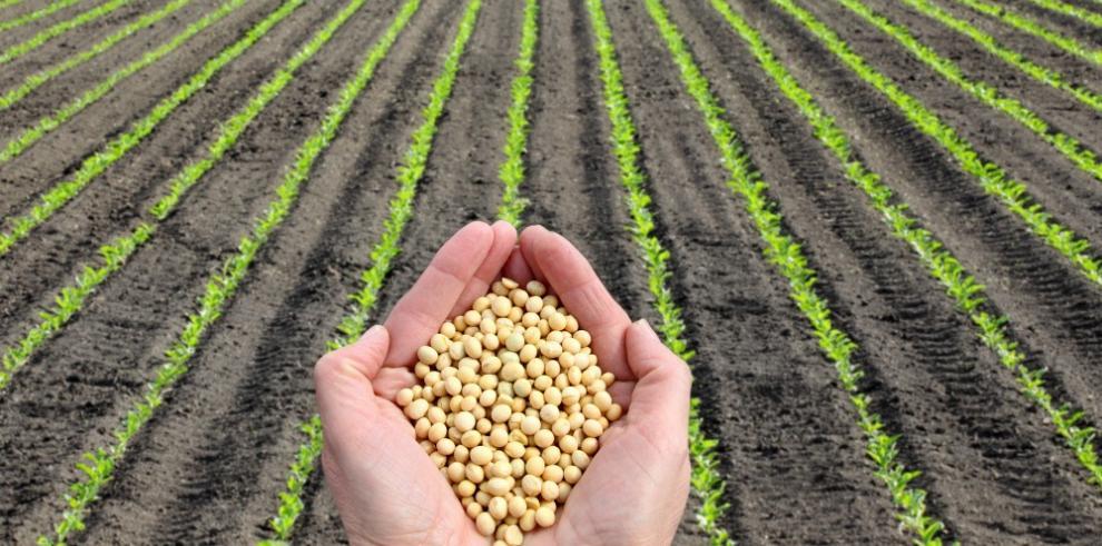 Más legumbres y frijoles para enfrentar el hambre y la sequía