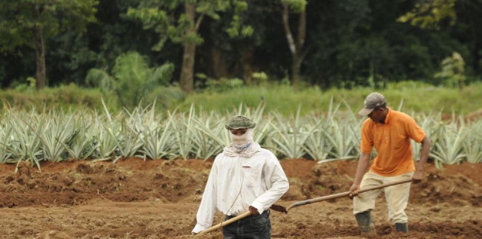 La agricultura comercial generó casi el 70% de la deforestación