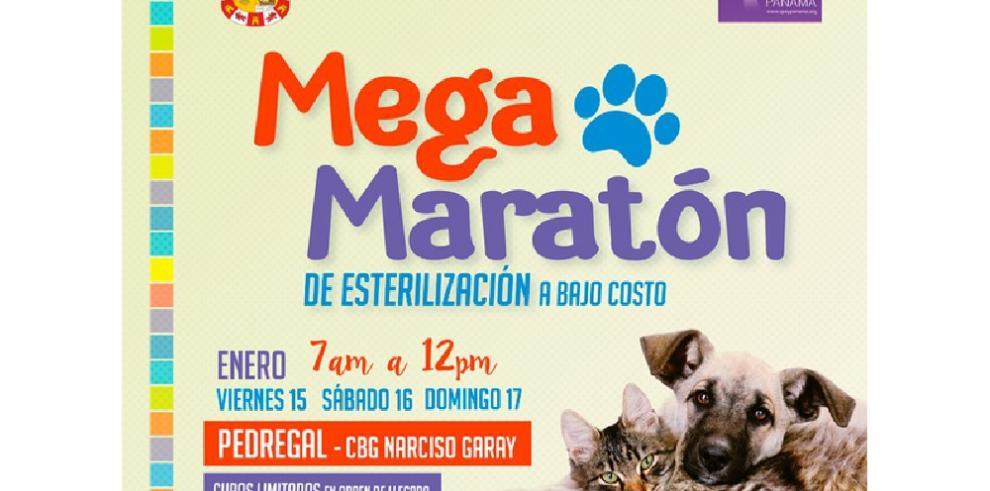Realizarán Mega Maraton de esterilización de mascotas