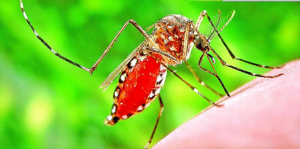 El Zika, un peligro durante el embarazo
