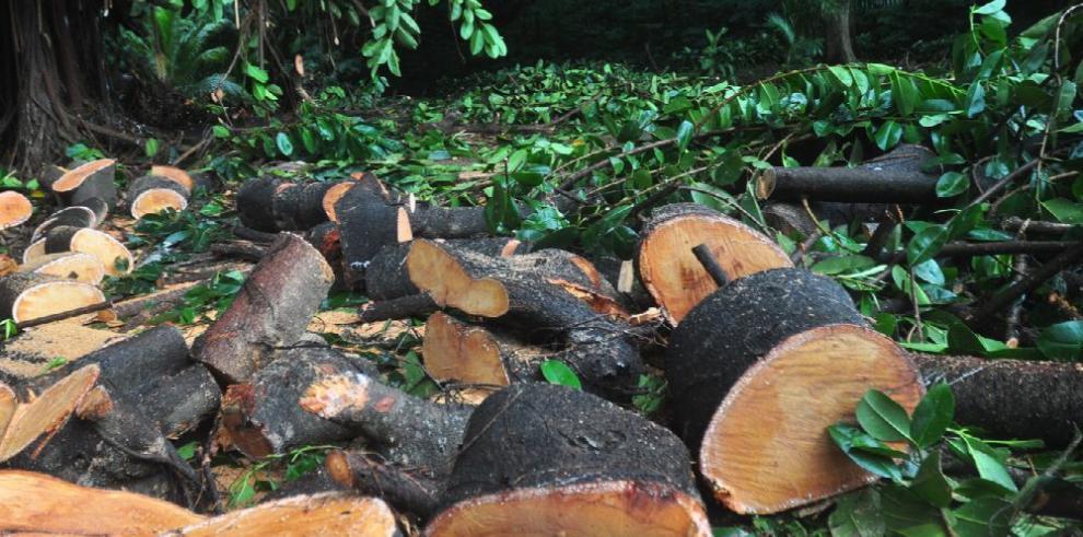 Lanzan proyecto para paliar la quema y tala de bosques