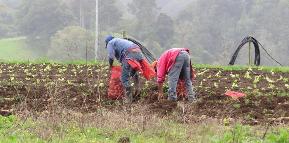 Cartera agropecuaria del BNP llega a $161.7 millones en Chiriquí