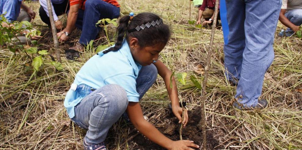 Presentan evolución de áreas reforestadas en Camino de Cruces