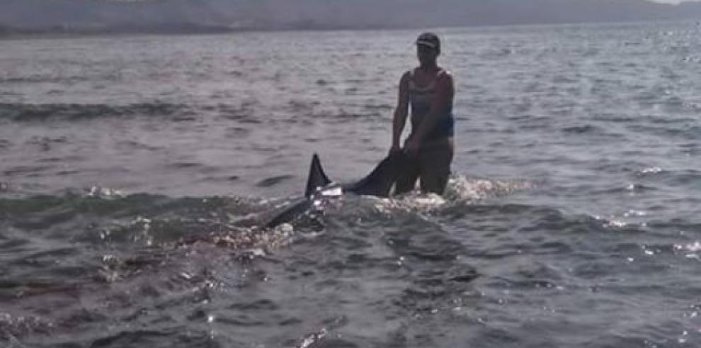 Encuentran a 50 delfines varados en playa del distrito de Tonosí