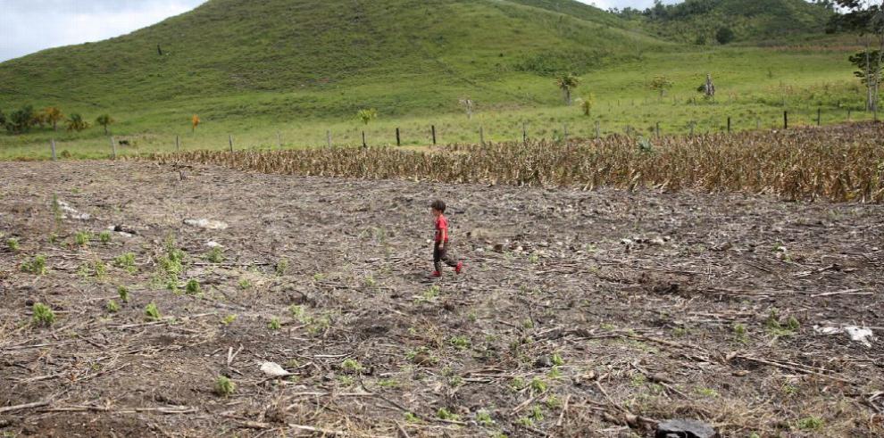 ONU planea extender programas contra la sequía