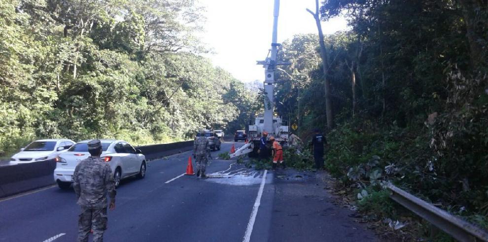 Realizan poda de árboles para evitar accidentes