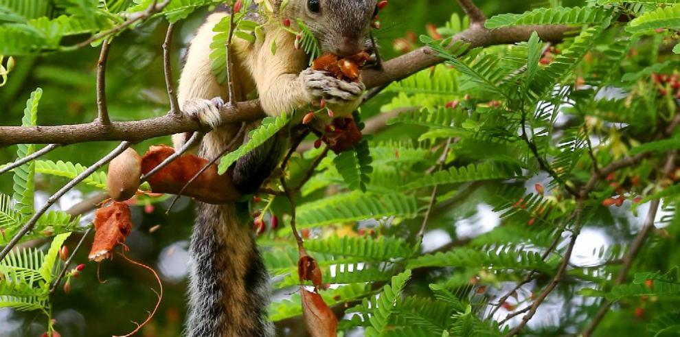 Avalan creación de fideicomiso para la biodiversidad