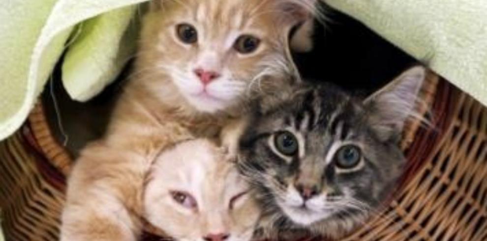 Un hombre de Florida ofrece 20,000 dólares por siete gatos