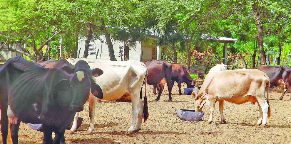 MIDA presentará avances del Plan Sequía a productores de Azuero