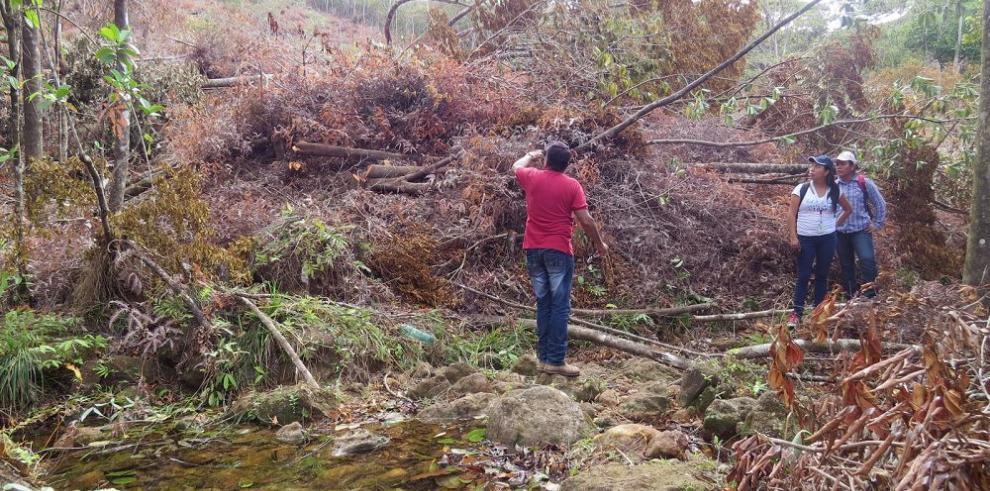 Siete hectáreas de bosques fueron talados sin permiso cerca de La Pintada