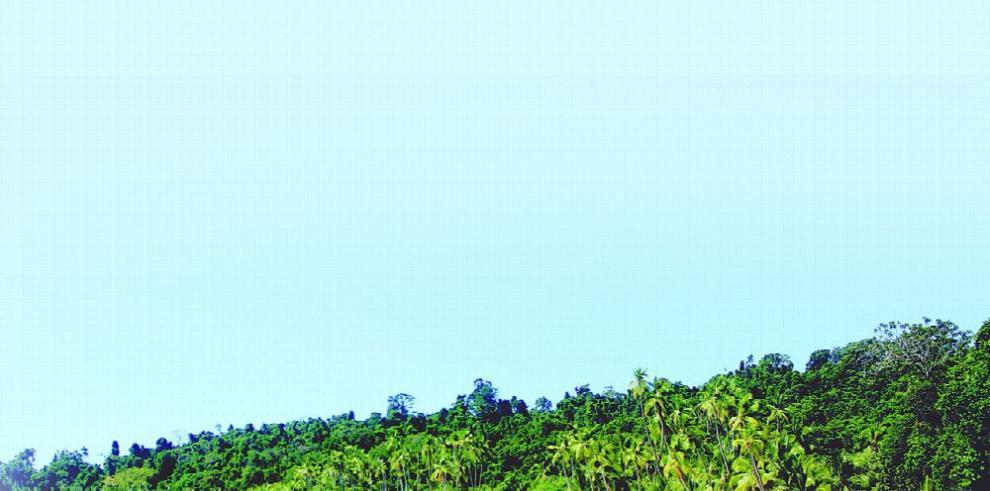 La biodiversidad de Panamá tiene bondades medicinales