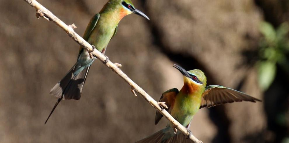 Onu pide detener la caza ilegal, en el Día del Medio Ambiente