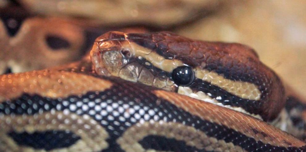 'Maravillas Tropicales', para conocer mejor a las temidas serpientes