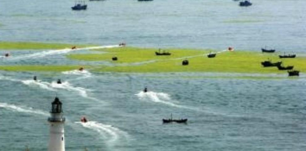 Los bosques de algas peligran por el calentamiento de las aguas