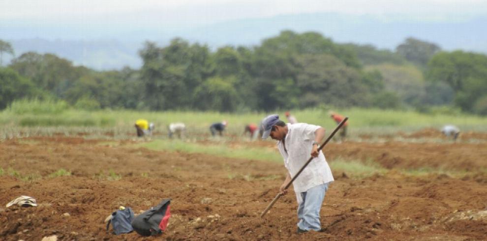 La agricultura, un sector clave para mitigar el cambio climático