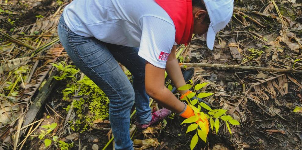 Plantan 1,100 árboles nativos en los playones de Sardinilla, Colón