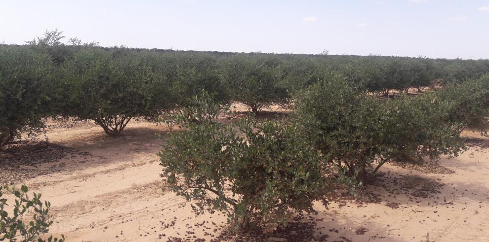 Israel enseña al mundo a sembrar en cualquier terreno